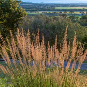 Grass and view_9971